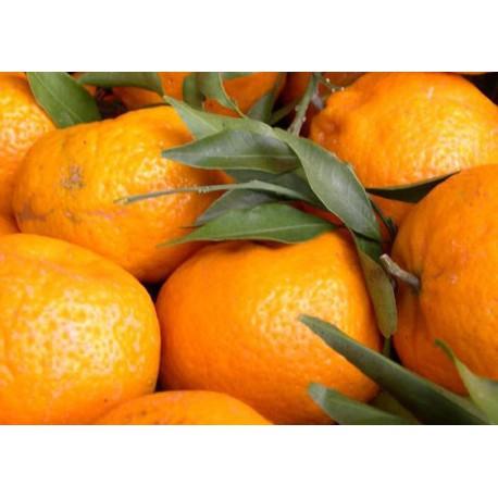 Mandarino Avana Apireni C-25
